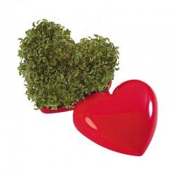 "Reklaminis augalas ""Small Heart"""