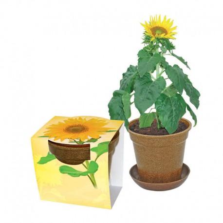 """Reklaminė saulėgraža ekologiškame vazonėlyje """"Easy Pot Big"""""""