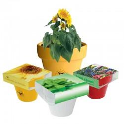 """Reklaminis augalas vazonėlyje """"Colour Pot"""""""