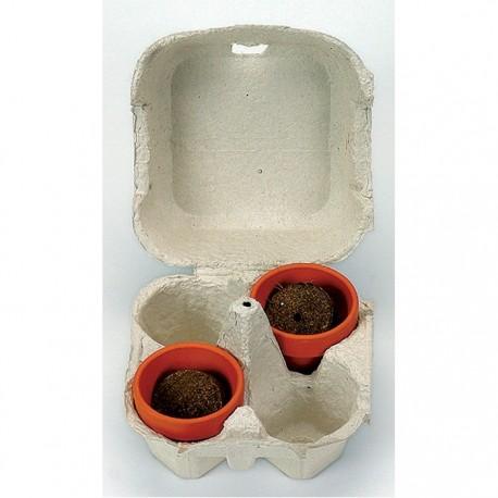"""Velykinis reklaminių augalų rinkinys """"Eggplant Box"""""""