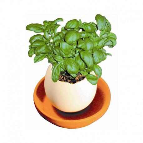 """Reklaminis augalas kiaušinio formos inde """"Growing Tamago"""""""
