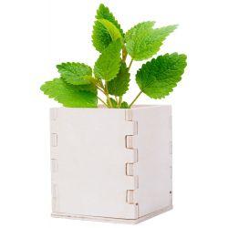 "Reklaminis augalas "" Mint """