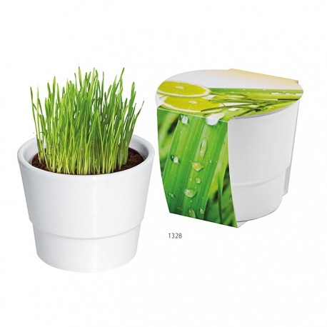 "Reklaminis augalas vazonėlyje ""Platnting Pot Set Lemon grass"""