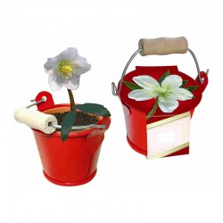 "Verslo dovana ""Little Bucket Christmas Rose"