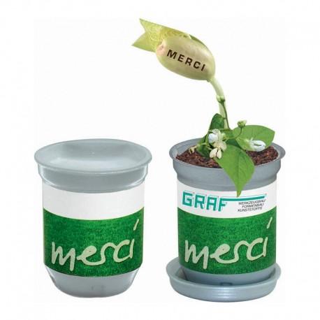 """Reklaminis augalas skardinėje """"XL Growing Tin MERCI"""""""