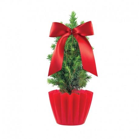 """Verslo dovana """"Gift Tree"""""""