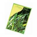 "Reklaminis sėklų maišelis ""Seed Packet"""